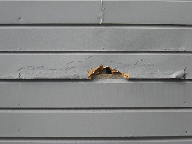 Damaged Siding